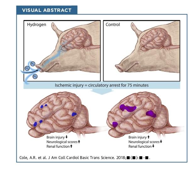 哈佛研究,氫氣對大腦的幫助