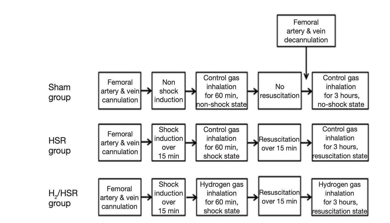 吸氫氣能舒緩出血性休克造成的肺損傷