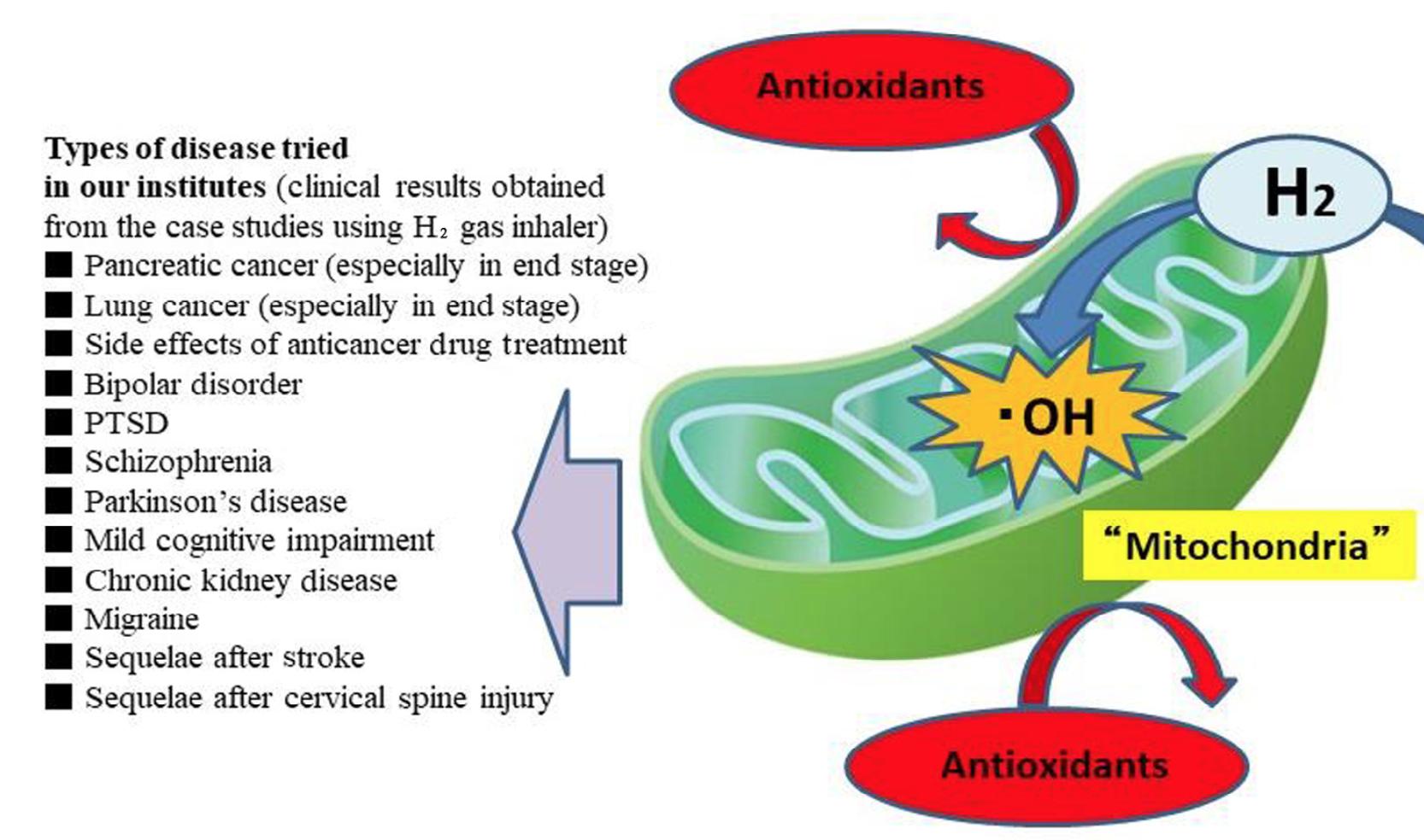 粒線體產生大量的羥自由基,只有氫氣能有效清除